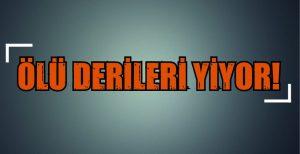 """""""ÖLÜ DERİLERİ YİYOR!"""""""