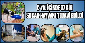 5 YIL İÇİNDE 57 BİN SOKAK HAYVANI TEDAVİ EDİLDİ
